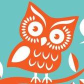 5 escolhas ilógicas feitas por corujas