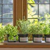 5 ideias para jardim cultivar alimentos em pequenos espaços