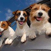 6 Deve-saber dicas para viajar com animais de estimação