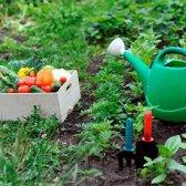 A cronologia do jardineiro quando plantar, água e ervas e legumes alimentos