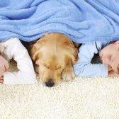 Recado Dada a urina de animais de estimação para e odores no tapete