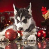Mantenha seus animais de estimação seguro, mantendo sua árvore de Natal longe de sua
