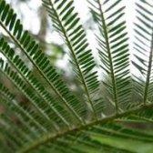 planta planilhas despeje Norte - Sul