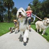 Aplicação Novo alerta: rover.com conecta cão proprietários, sitters