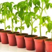 Os melhores vegetais para crescer por 4 temporadas