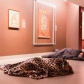 O Museu de Arte Rubin hospeda uma festa do pijama adulto