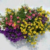 Top 10 flores cesta de suspensão