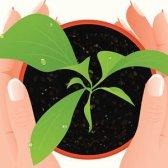 O que plantas devem de & não devem ser plantadas em conjunto [infográfico]