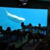 Yoga com as baleias?