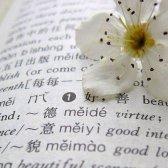 palavras intraduzíveis sobre o amor